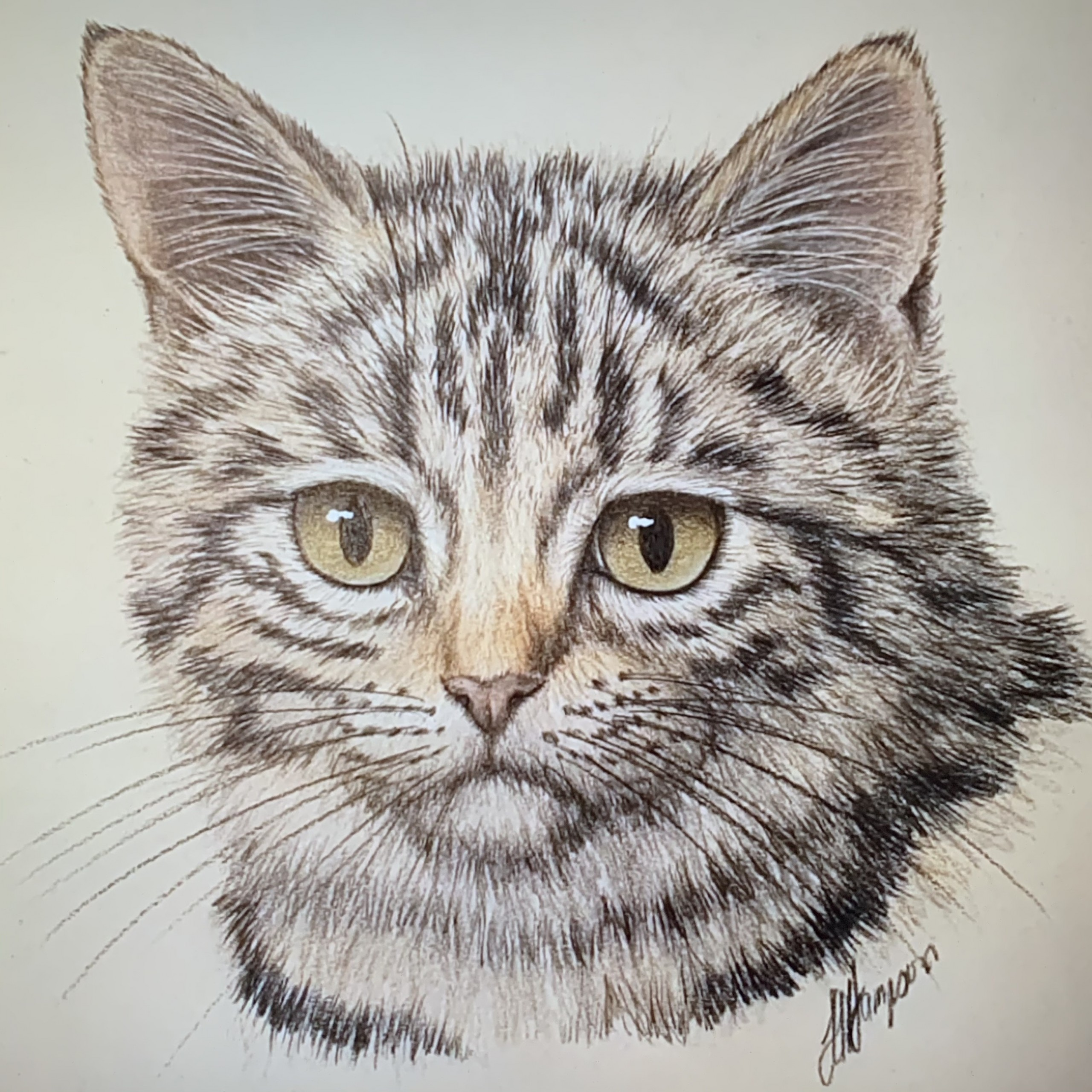 TABBY CAT   BEGINNERS BOTANICAL COLOURED PENCIL DRAWING  ONLINE COURSE